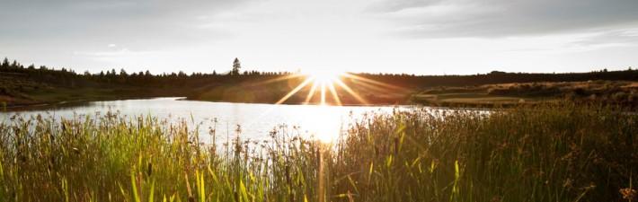 sustainability-environment